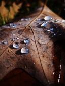 Rain 6