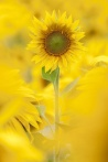 Yellow Palette 08