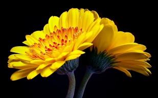 Yellow Palette 14