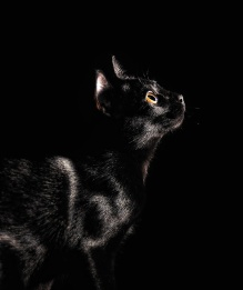 black palette 10