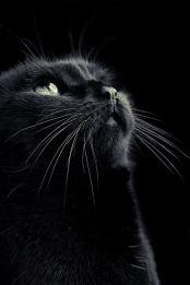 black palette 12