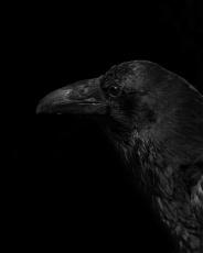 black palette 13a