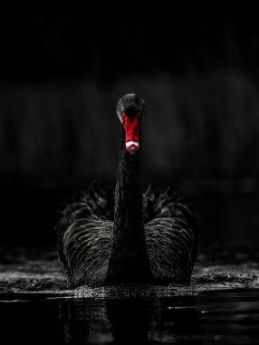 black palette 15a