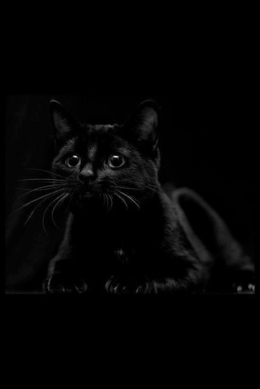 black palette 3