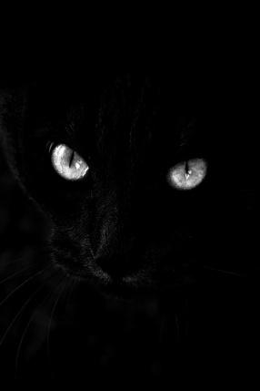 black palette 4