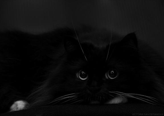 black palette 5