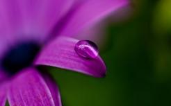 purplepalette10