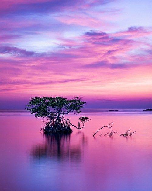 purplepalette15