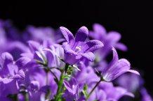 purplepalette8
