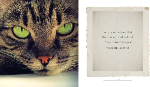 Meow-a-book-of-happiness-for-cat-lover2