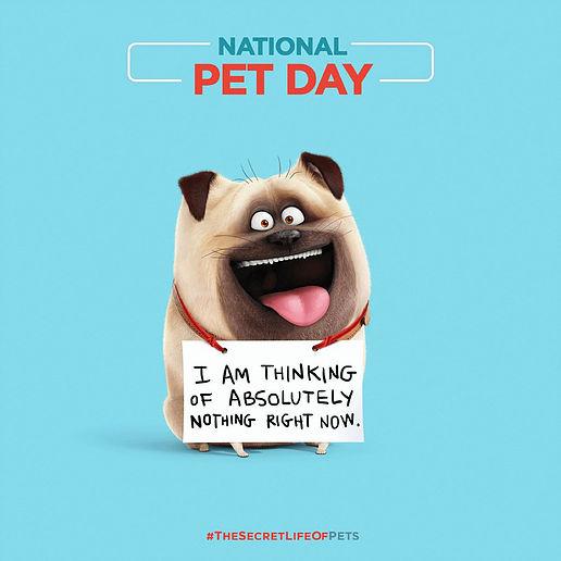 National Pet Day Dog