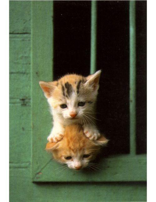 Cat & Meow