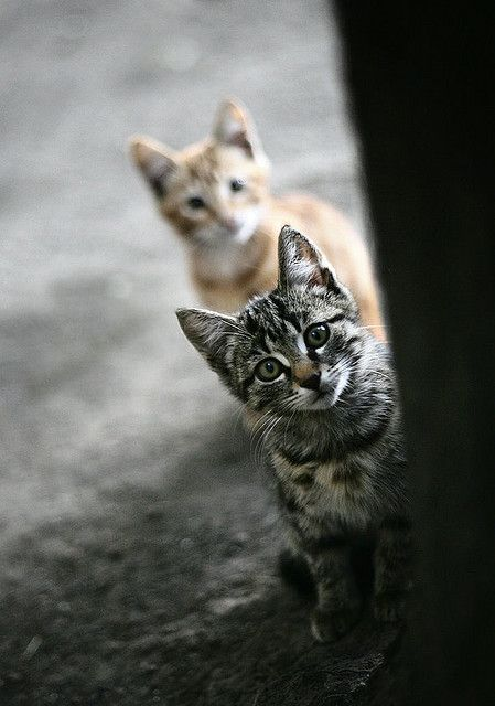 Cat & Meow2