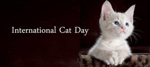 InternationalCatDay2016