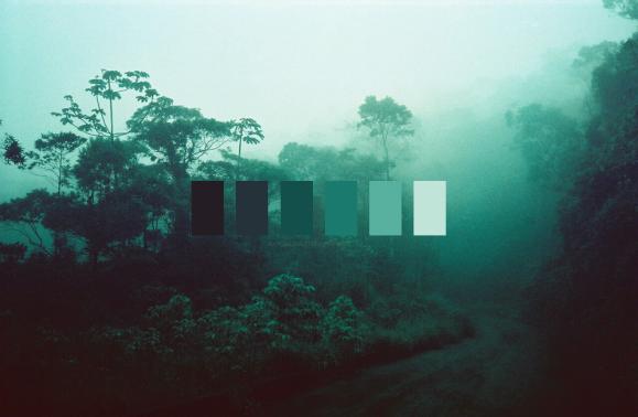 meadow18