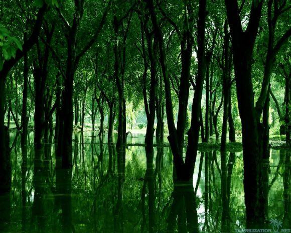 meadow6