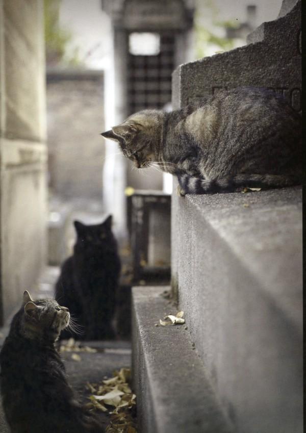Traveling Cats Cimetière Montmartre