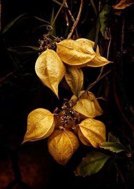 autumnequinox5